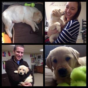 Millie Puppy!