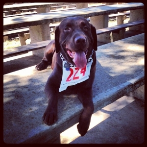 I can't wait to find a doggy friendly race to run with Millie!