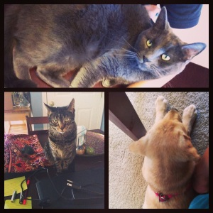 April 11th - I know this blog is Run with Pup, but we actually have two more critters at home. At the top you'll see Mercedes (she's lying on the table between me and my keyboard…she's my blogging buddy for sure) and in the bottom-left corner you'll find Luna (she likes to stare at me while I'm on the computer, ha!). We brought these two ladies home in 2011 from the ADOPT Pet Shelter (HYPERLINK). This picture is a montage of images I took when working from home one day. Mercedes helps me type, Luna keeps an eye on everything and Millie cuddles my feet. It's safe to say that Hubs and I are now outnumbered by the critters in our home!
