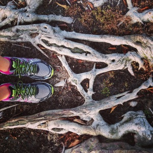 Found some very cool trees (and roots!) during my runs