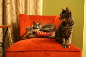 My first snuggle buddies. Mercedes & Luna!