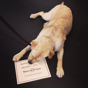 Millie just graduated from her Manners class. They recommend repeating the class 2x or 3x before moving onto more advanced classes though. Poor Millie, already being held back in school!
