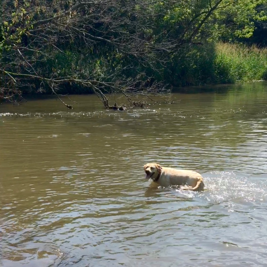 Millie Swimming - Copy
